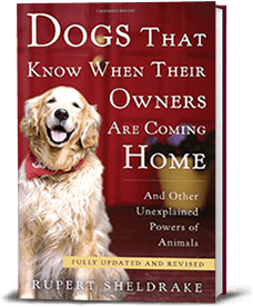 Book cover for Dogs That Know When Their Owners Are Coming Home